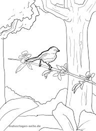 Kleurplaat Vogel In De Boom Gratis Kleurpaginas Om Te Downloaden