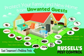 russells pest control knoxville tn.  Pest The Plan And Russells Pest Control Knoxville Tn X