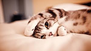 beautiful cute kitten wallpaper