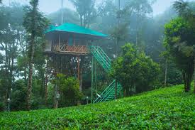 Dream Catcher Kerala Tree House Dream Catcher Plantation Resort Munnar 11