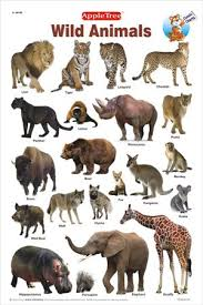 wild animals chart. Perfect Animals Chart And To Tamil Wild Animals Pets Click Name Polar Animal California  Glance Deer U The Over Their Of Through Daily Wildlife Find Species  Inside Wild Animals S