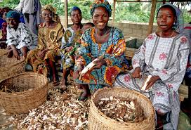 Nigerian Women Preparing Cassava