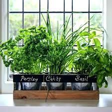 herb planter indoor hanging kitchen herb garden indoor kitchen herb garden garden planter boxes long herb herb planter