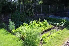garden shade. 17 Vegetables That Grow Well In The Shade Garden