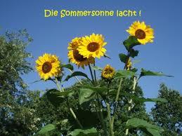 Sonnenblumen Sommer Freude Grußkarten E Cards Postkarten Sommer