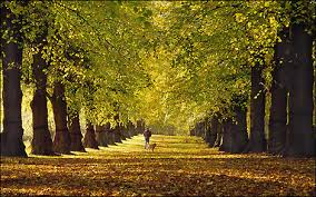 BBC - Nottingham - Nature - Autumn in Nottinghamshire