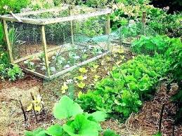 protecting garden from animals how to protect vegetable garden from animals protection protecting garden plants from protecting garden from animals