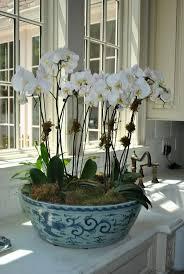 Dnde cultivar las orqudeas. Coffee Table ArrangementsOrchid ...