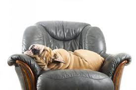 The Dog Trainer How to Keep Dogs f Furniture
