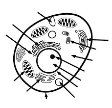 Small Picture Plant And Animal Cell Coloring Page Coloring Home