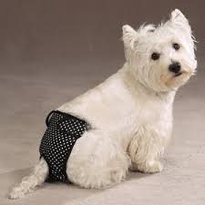 Первая течка у собаки. Что нужно знать хозяину.