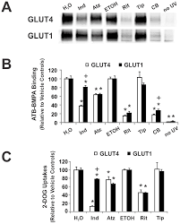 Proteasen) hemmen und damit den abbau von proteinen verhindern können. Hiv Protease Inhibitors Act As Competitive Inhibitors Of The Cytoplasmic Glucose Binding Site Of Gluts With Differing Affinities For Glut1 And Glut4