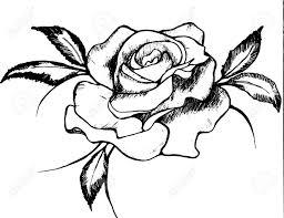 Vettoriale Disegno In Bianco E Nero Di Una Rosa Rose è Un Simbolo