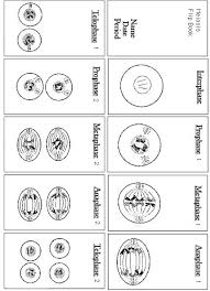 cell cycle flip book 20 best cells images on pinterest high school biology high school