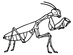Small Picture Coloring Pages Insects