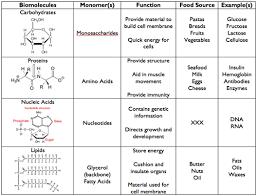 Biological Macromolecules Chart 4 Major Biomolecules Biology Classroom Science Biology