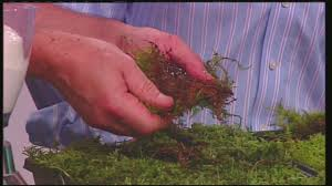 Mass Appeal Tips for growing moss in your yard - YouTube