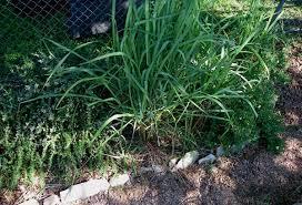 garden in central texas wabi sabi baby