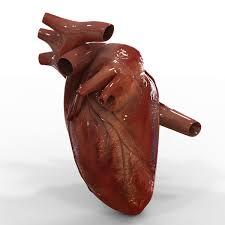 how the heart works eett making movies heart