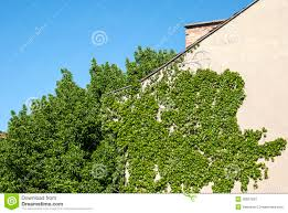 House Wall With Climbing Plants Stock Images  Image 30927834Wall Climbing Plants