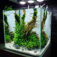 Nano Aquarium Design Pin By Aquascaper On Nano Tank Layout Inspirations Planted