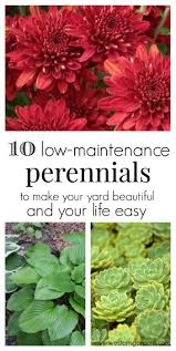 low maintenance perennials outdoor best landscaping ideas only on flower gardens design front yards planters