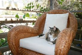 Awesome Pottery Barn Rattan Furniture The Late Miss Clio Enjoying A Moment  Outside On Pottery Barn Rattan Chair T6