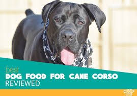 Cane Corso Feeding Chart Best Dog Food For Cane Corso Top 5 Recommended Brands