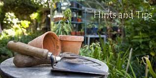 hints and tips clonmel garden centre