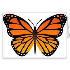 Monarch Butterfly Clipart Template - Pencil And In Color Monarch ...
