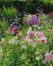Small Picture Cottage garden flowers Daisies Liatris Lilies Crocosmia