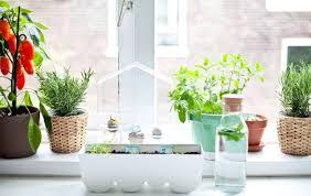 apartment herb garden. PHOTO: Apartment Herb Garden