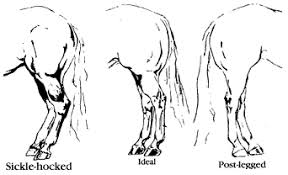 What To Look For In A Racehorse Conformation Buyers Guide