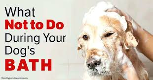 bathtub hose for washing dog bathtub hose for washing dog