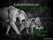 conservation of wildlife in essay example of ged essay  conservation of wildlife in essay
