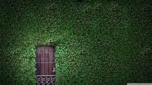 Wall Green Wall Hd Desktop Wallpaper High Definition Fullscreen