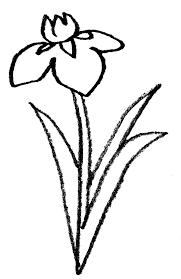 菖蒲の花の手書きイラスト端午の節句 えんぴつと画用紙