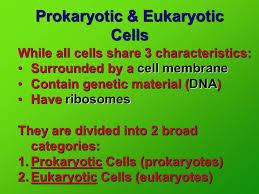 Prokaryotic And Eukaryotic Cells Chart Prokaryotic Eukaryotic Cells In Your Notes Set Up A