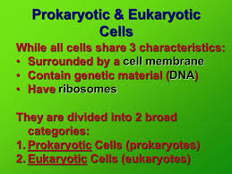 Prokaryotic Eukaryotic Cells In Your Notes Set Up A