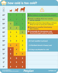 How Cold Is Too Cold For Your Dog Use This Chart From