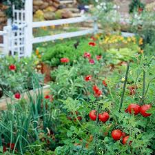 Small Picture How to Plan a Vegetable Garden