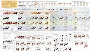 Cat Colors And Patterns Custom Guide To Horse Colors And Patterns By Majnouna On DeviantArt