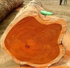 best wood for making furniture. All These Wood Are Strong, Termite Resistant, Long Lasting And Due To Its Grain Texture, It Looks Beautiful. Best For Making Furniture M