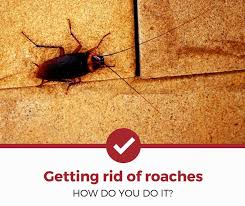 getting rid of roaches