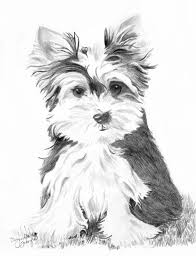 Yorkie puppy coloring pages how draworkshire terrier art learning puppies poo maltese for miniature dog shorkie mini toy. Yorkie Dog Coloring Pages Page 1 Line 17qq Com