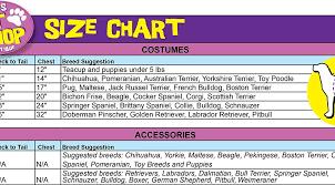 Rubies Costume Teen Titans Pet Costume Robin