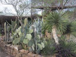 Small Picture Cactus Garden Museums And Tourist Centres In Lanzarote Throughout