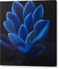 blue lotus flower on black canvas canvas print by megan sax