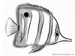 Small Picture Aquarium Coloring Pages Elegant Freedom For Aquarium Fish