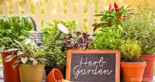 start an herb garden beginners guide